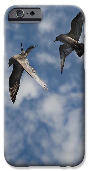 Sea Birds iPhone Cases - Arctic Skuas iPhone Case by Andy Astbury