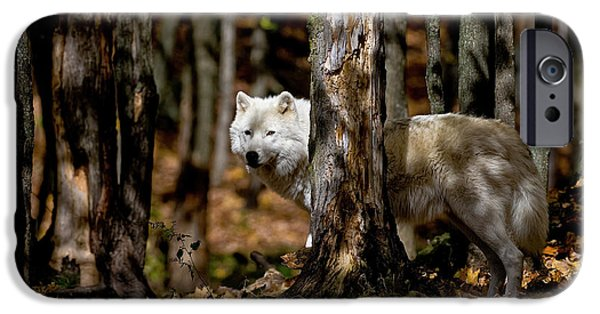 Wildlife Photographer Mixed Media iPhone Cases - Arctic Wolf in Forest iPhone Case by Michael Cummings