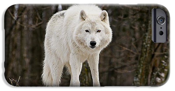 Wildlife Photographer Mixed Media iPhone Cases - Arctic Wolf On Hill iPhone Case by Michael Cummings