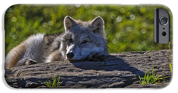 Wildlife Photographer Mixed Media iPhone Cases - Arctic Wolf Pup 2 iPhone Case by Michael Cummings