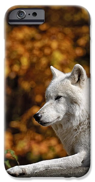 Arctic Wolves on Rocks iPhone Case by Michael Cummings
