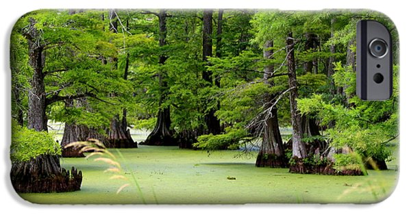Arkansas iPhone Cases - Arkansas Lake with Cypresses iPhone Case by Carol Groenen
