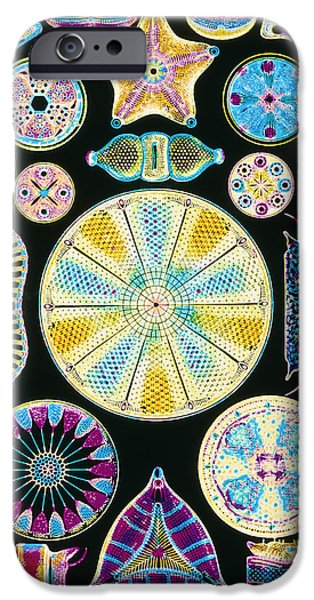 Diatoms iPhone Cases - Art Of Diatom Algae (from Ernst Haeckel) iPhone Case by Mehau Kulyk