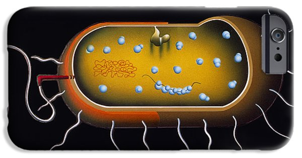 Microbiology Photographs iPhone Cases - Artwork Of Structure Of A Bacterium iPhone Case by Francis Leroy, Biocosmos