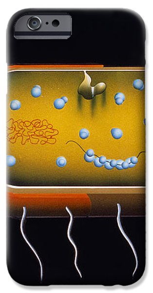 Artwork Of Structure Of A Bacterium iPhone Case by Francis Leroy, Biocosmos