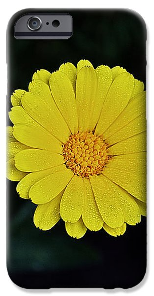 Santeria iPhone Cases - Artwork of the nature for a moment iPhone Case by Axko Color de paraiso