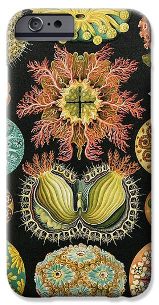 Art Forms Of Nature iPhone Cases - Ascidiae Organisms, Artwork iPhone Case by Mehau Kulyk