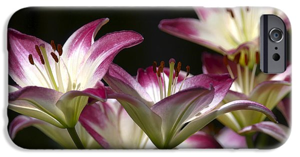 Asiatic Lily iPhone Cases - Asiatic Lilies iPhone Case by Sharon  Talson