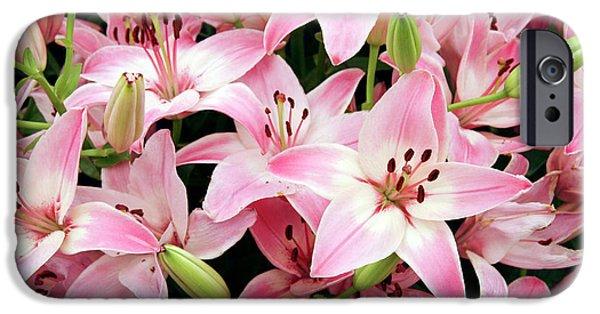 Lilium iPhone Cases - Asiatic Lily (lilium vermeer) iPhone Case by Cordelia Molloy