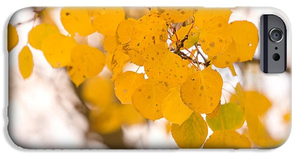 Striking Photography iPhone Cases - Aspen Leaves iPhone Case by James BO  Insogna