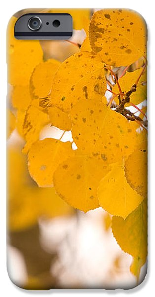Aspen Leaves iPhone Case by James BO  Insogna