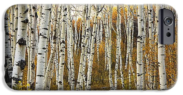 Autumn iPhone Cases - Aspen Tree Grove iPhone Case by Ron Dahlquist - Printscapes