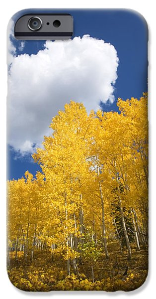 Northern Colorado iPhone Cases - Aspens and Sky iPhone Case by Ron Dahlquist - Printscapes