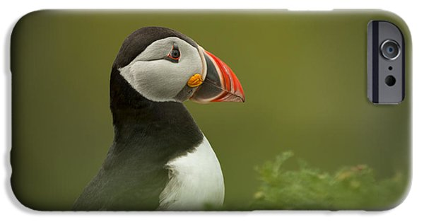 Sea Birds iPhone Cases - Atlantic Puffin iPhone Case by Andy Astbury