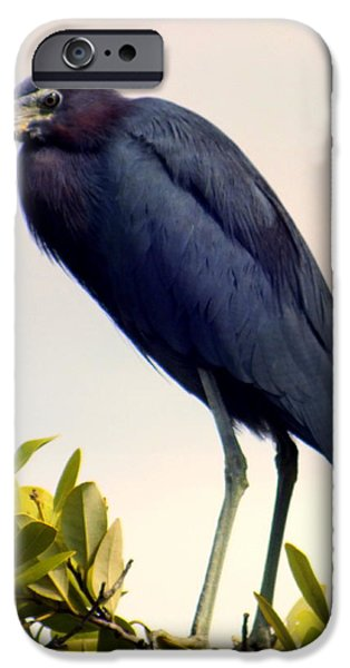 Audubon Blue iPhone Case by KAREN WILES