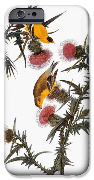 Ornithology iPhone Cases - Audubon: Goldfinch iPhone Case by Granger