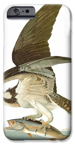 19th Century iPhone Cases - Audubon: Osprey iPhone Case by Granger