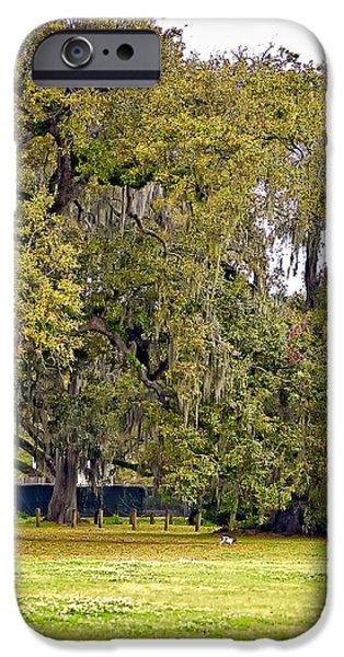 Audubon Park 2 iPhone Case by Steve Harrington