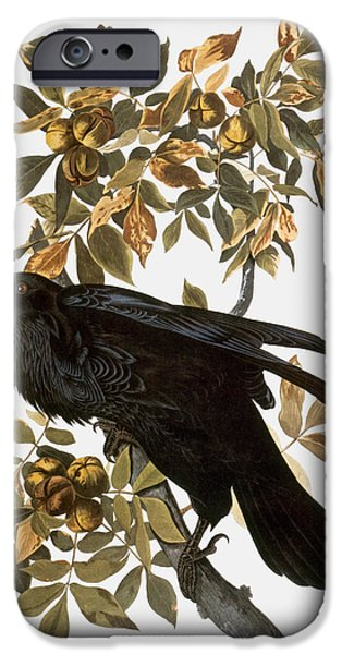 Ornithology iPhone Cases - Audubon: Raven iPhone Case by Granger
