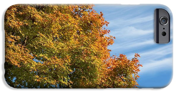 Beautiful Autumn Day iPhone Cases - Autumn Anticipation iPhone Case by Carol Groenen