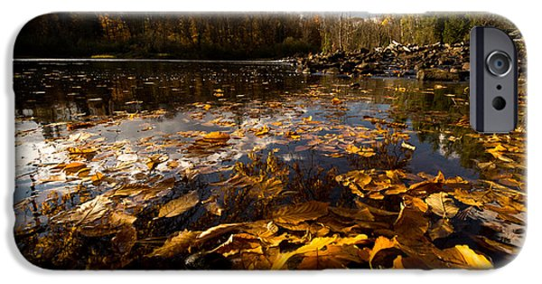 Algonquin iPhone Cases - Autumn at Ragged Falls iPhone Case by Cale Best