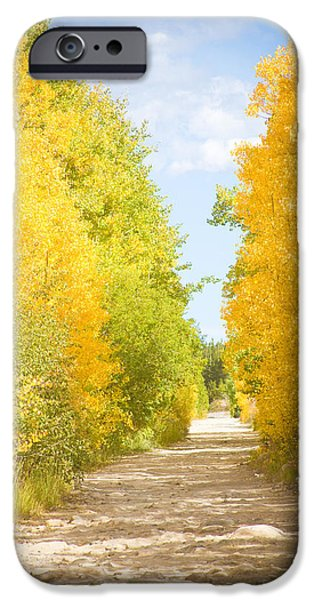 Autumn Back County Road iPhone Case by James BO  Insogna