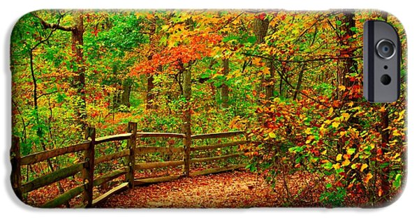 Tree Art Print iPhone Cases - Autumn Bend - Allaire State Park iPhone Case by Angie Tirado