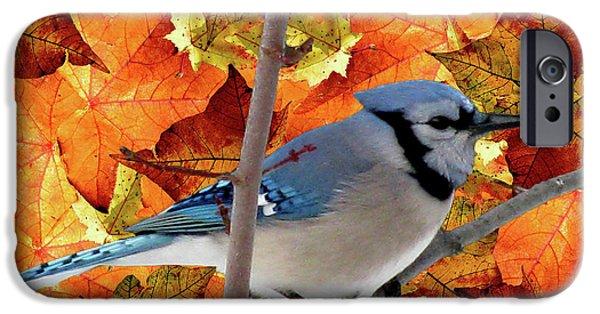 Animal Photograph Mixed Media iPhone Cases - Autumn Blue Jay iPhone Case by Debra     Vatalaro