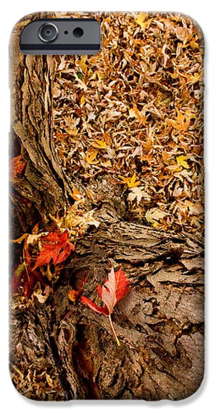 Autumn Fall iPhone Case by James BO  Insogna