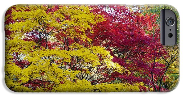 Flora iPhone Cases - Autumn Foliage iPhone Case by Dr Keith Wheeler