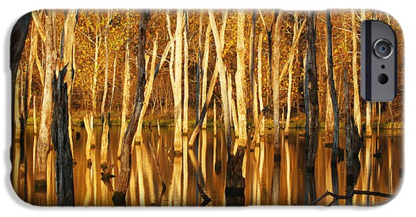 Fall Scenes iPhone Cases - Autumn Gold iPhone Case by Dennis Hedberg