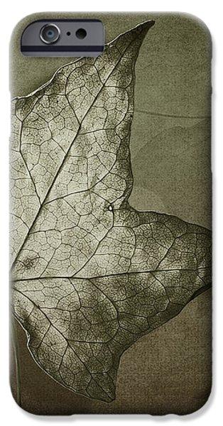 Autumn iPhone Case by Jan Pudney