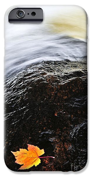 Creek iPhone Cases - Autumn leaf on river rock iPhone Case by Elena Elisseeva