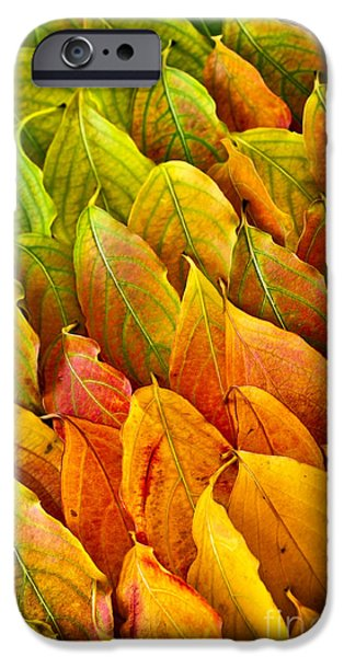 Leaf Change iPhone Cases - Autumn leaves arrangement iPhone Case by Elena Elisseeva