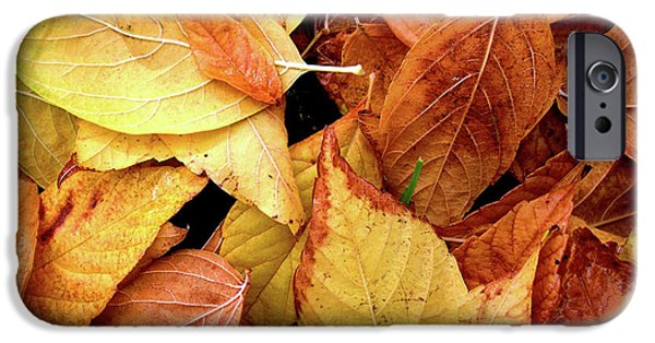 Element Photographs iPhone Cases - Autumn leaves iPhone Case by Carlos Caetano
