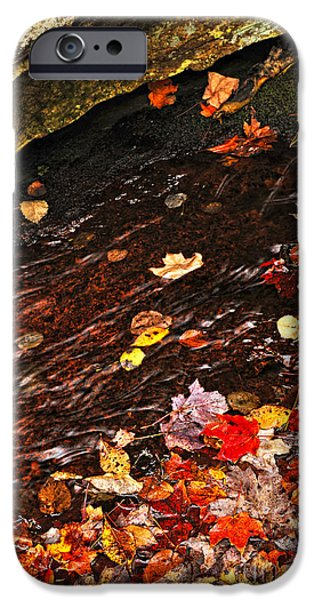 Creek iPhone Cases - Autumn leaves in river iPhone Case by Elena Elisseeva