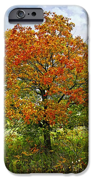 Autumn iPhone Cases - Autumn maple tree iPhone Case by Elena Elisseeva
