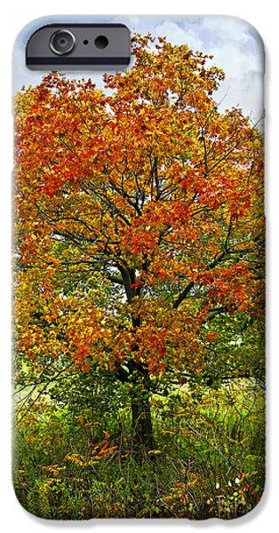 Autumn maple tree iPhone Case by Elena Elisseeva