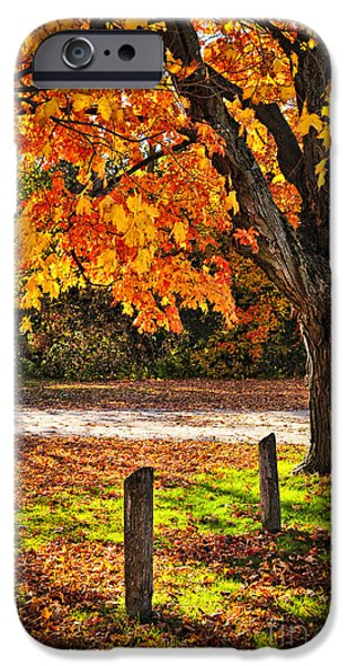 Autumn Road iPhone Cases - Autumn maple tree near road iPhone Case by Elena Elisseeva