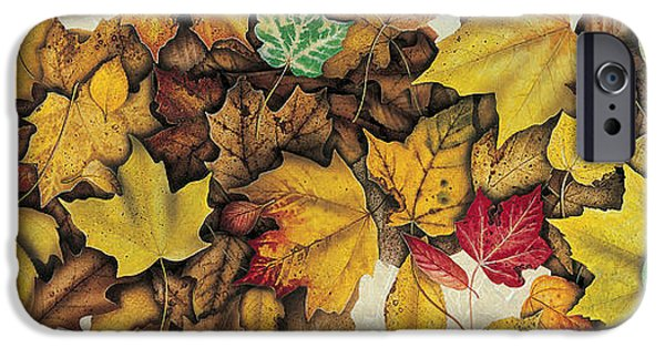 Autumn Season iPhone Cases - Autumn Splendor iPhone Case by JQ Licensing