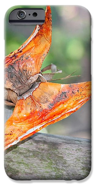 Autumn - the year's loveliest smile iPhone Case by Christine Till