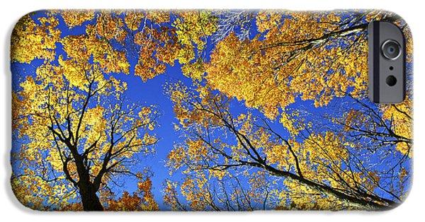 Autumn iPhone Cases - Autumn treetops iPhone Case by Elena Elisseeva