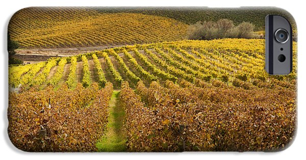 Grapevine iPhone Cases - Autumn Vines iPhone Case by Mike  Dawson