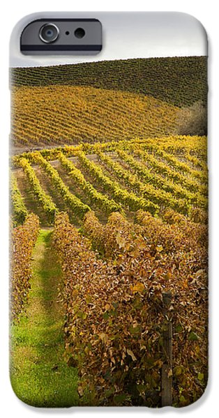 Autumn Vines iPhone Case by Mike  Dawson