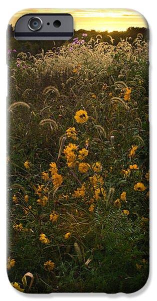 Autumn Wildflower Sunset - D007757 iPhone Case by Daniel Dempster