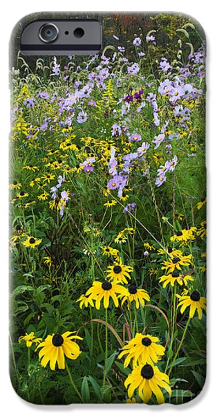 Indiana Autumn iPhone Cases - Autumn Wildflowers - D007762 iPhone Case by Daniel Dempster
