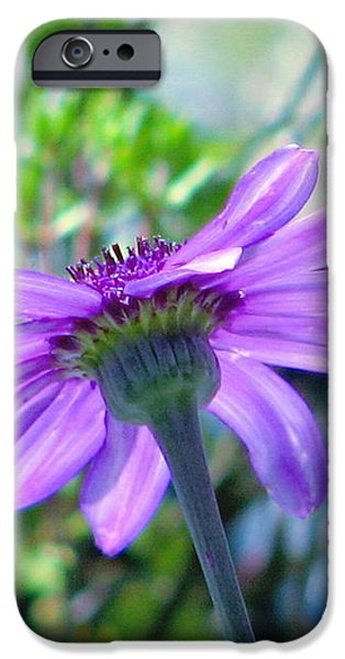 Avatar's Pericallis iPhone Case by Rory Sagner