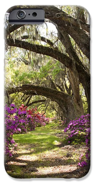 Live Oaks iPhone Cases - Azaleas and Live Oaks at Magnolia Plantation Gardens iPhone Case by Dustin K Ryan
