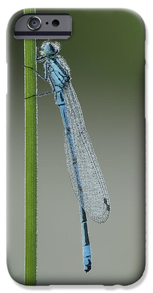 Roosting iPhone Cases - Azure Damselfly iPhone Case by Andy Astbury
