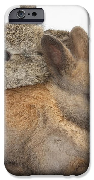 Baby Rabbits iPhone Case by Mark Taylor
